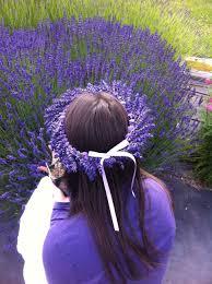 beautiful fresh lavender head wreath falling for lavender
