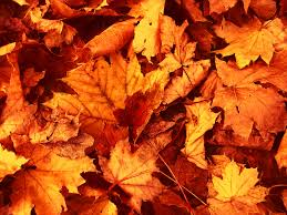 dried autumn leaves 6918691