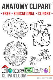 anatomy crafts for kids