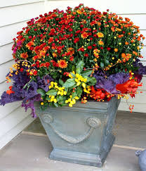 37 best container gardens images on container plants