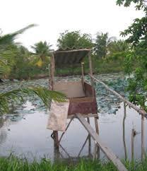Ngôi nhà nhỏ trên đồng bằng sông Cửu Long Images?q=tbn:ANd9GcT_fdeJp2uPIoAZSp2QzdhYKUHTnhB5cuuSfoIw7qwQJg4Fo33mFstPBM4k3A