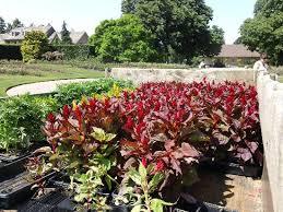 Niagara Botanical Garden Niagara Parks Botanical Gardens Niagara Falls All You Need To