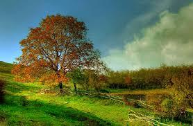 imagenes de otoño para fondo de escritorio fondo pantalla paisaje campo otoño