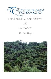 Plant Adaptation In Tropical Rainforest Rainforest Booklet Final Version