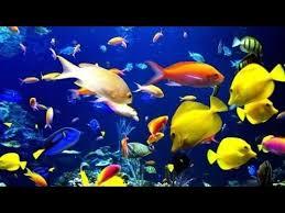 top 4 types of food for ornamental fish fast food free aquarium