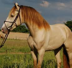 21 horses with the most beautiful u0026 rare colors in the world