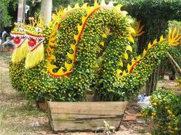 enjoy sa dec flower gardens asiatours