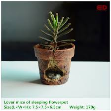 flower pot bonsai picture more detailed picture about everyday