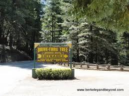 Chandelier Tree Address Chandelier Tree Avenue Of The Giants Thesecretconsul Com