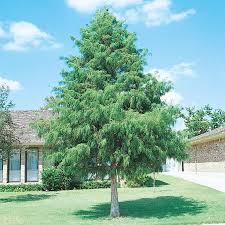 srh trees