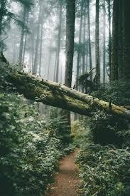 wallpaper tumblr forest forest lockscreen tumblr