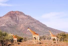 african safari animals south african safari in the karoo eastern cape we are travel girls