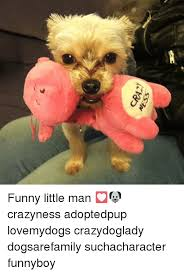 Crazy Dog Lady Meme - cr42y ness funny little man crazyness adoptedpup lovemydogs