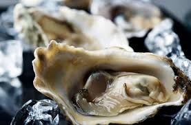 oyster a thanksgiving tradition could get