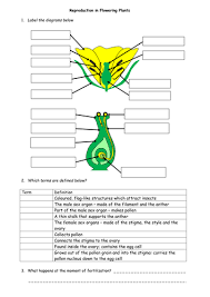 plant reproduction by lizziethompson teaching resources tes