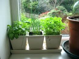 indoor windowsill planter kitchen herb pots windowsill herb garden outdoor windowsill herbs