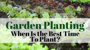 best time to plant a garden home design
