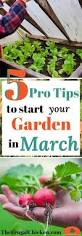 603 best garden ideas images on pinterest urban gardening