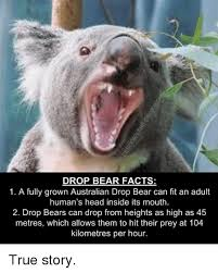 High Koala Meme - 25 best memes about drop bear drop bear memes