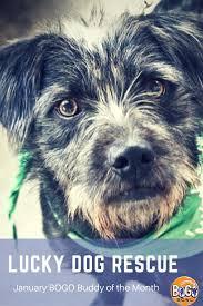 banana joe affenpinscher pedigree 11 best canis lupus images on pinterest animals dog breeds and