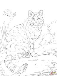 Iraq Flag Coloring Page European Wild Cat Coloring Online Super Coloring Wild Cat
