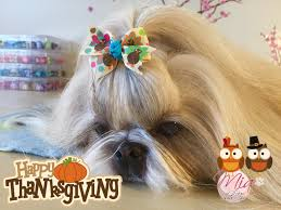 Have A Great Thanksgiving Day Happy Thanksgiving Day 2015 Mia Shih Tzu