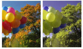 Deuteranopia Color Blindness What Is Color Blindness And The Different Types Crescent