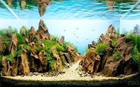 Aquascape Design Layout The Incredible Art Of Underwater Landscaping For Aquariums