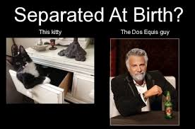 Meme Dos Equis - the humor hub dos equis guy memes hobbies humour