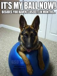 Funny German Shepherd Memes - german shepherd stole your yoga ball whoops description from