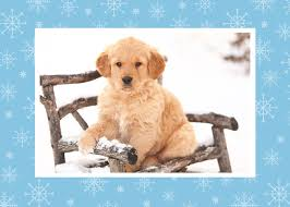 photo christmas cards u2013 photo holiday greeting cards