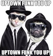 Funk Meme - blues brothers animals imgflip