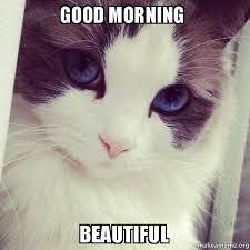 Good Morning Cat Meme - good morning beautiful ridiculously photogenic cat make a meme
