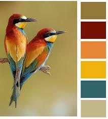 Room Color Palette Generator Best 25 Color Palettes Ideas On Pinterest Color Pallets