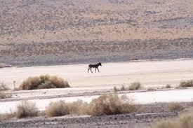 file donkey in the mojave desert jpg wikipedia