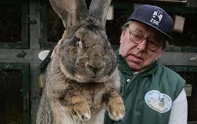 rabbit facts 20 facts rabbits