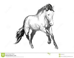 hand draw sketch horse stock illustration image of horse 49777140