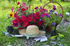 the flowers of summer at beautiful summer background with flowers garden tools and straw