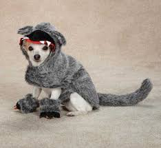 Funny Halloween Costumes Dogs 65 Dog Halloween Costumes Images Dog Halloween