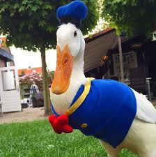 guus the duck the most fashionable bird on the in
