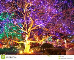 garden stock photo image of gardens green light 30108286