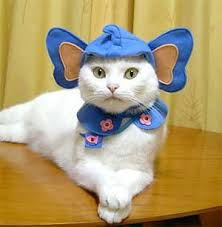 Halloween Costumes Cats Wear 25 Cats Costumes Ideas Cat Costumes Cute