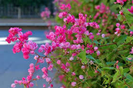 favorite vines for backyard flower gardens birds and blooms