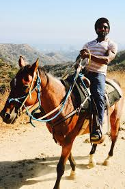 back in the saddle again at sunset ranch hollywood u2014 the book of taste