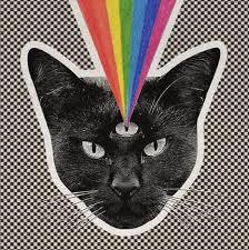 cat photo album never shout never reveals black cat album details axs