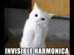 Invisible Cat Memes - invisible cat tribute youtube