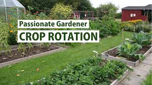 vegetable families u0026 crop rotation primex garden center