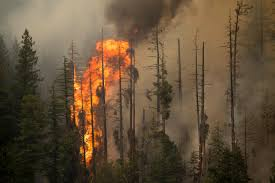 Wildfire Yukon by The 10 Worst Us Natural Disasters Of 2015 Business Insider