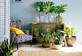 decor plants home plants decoration at home home decoration plants plants adorable