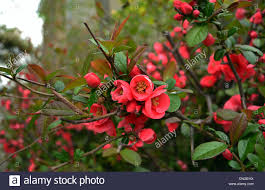 beautiful flower images beautiful flower blossoming blossoming tree bush with flowers